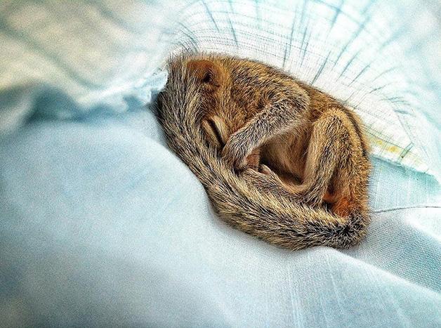 AbandonedSquirrel5