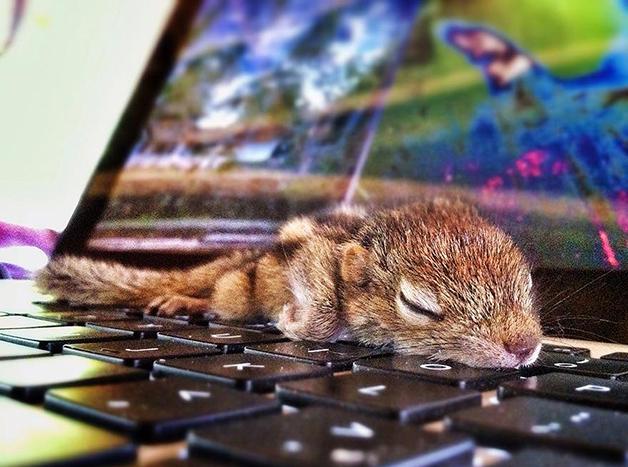AbandonedSquirrel7