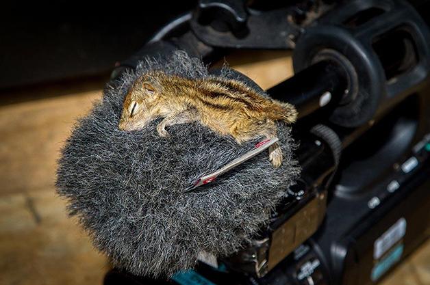 AbandonedSquirrel9