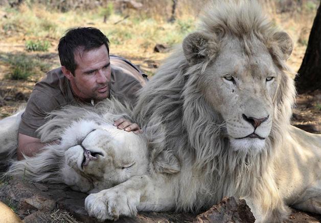 LionWhisperer4
