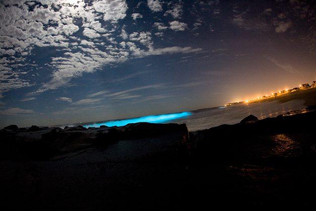 bioluminescencia_unleashed.org_.au_