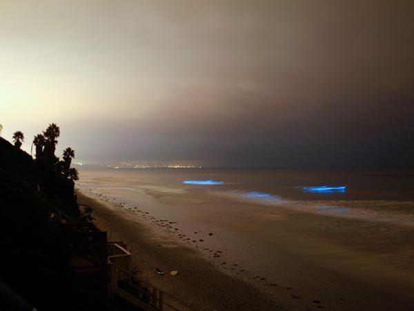 bioluminescentcalifornia_simplepimple.com_