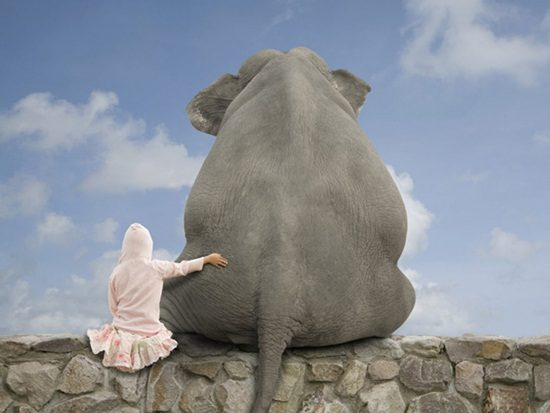 costas-elefante