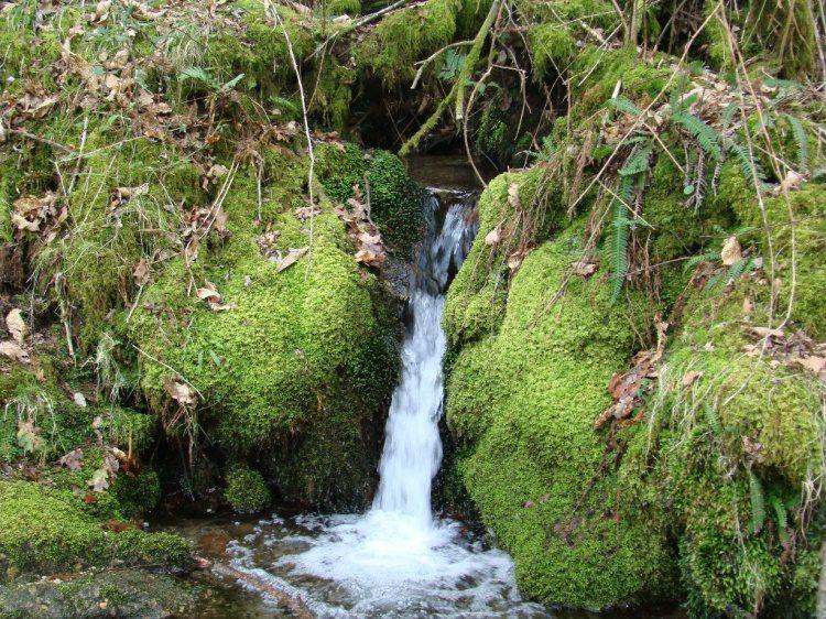 fonte-de-agua-Renvavel