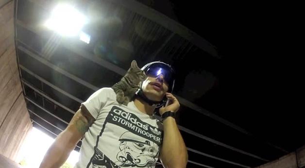 gato_bike31
