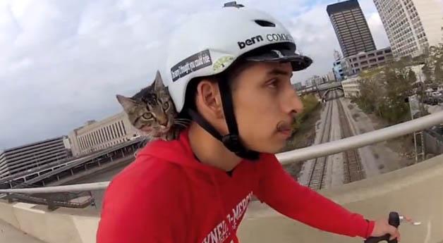 gato_bike5