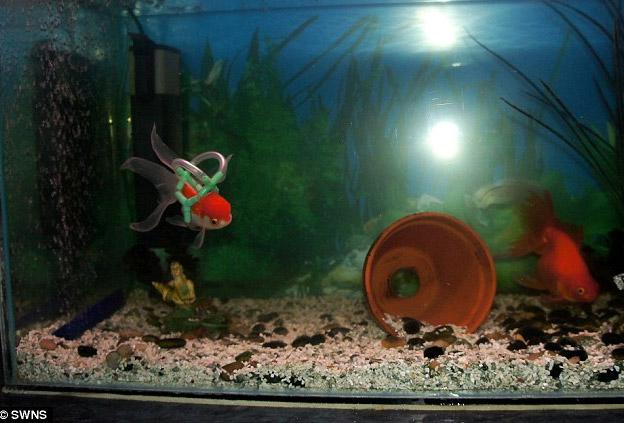 peixe-2