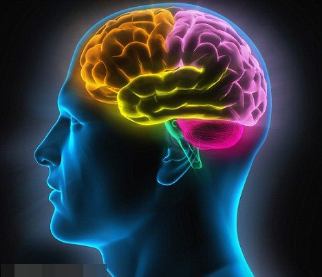 a-mente-humana (1)