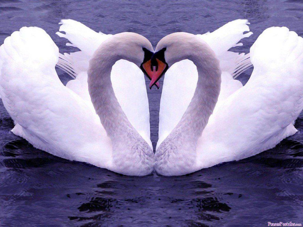 amor-imagens-amor-81a234