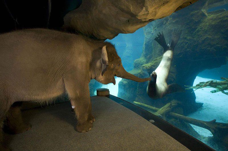 an-elephant-meets-a-sea-lion