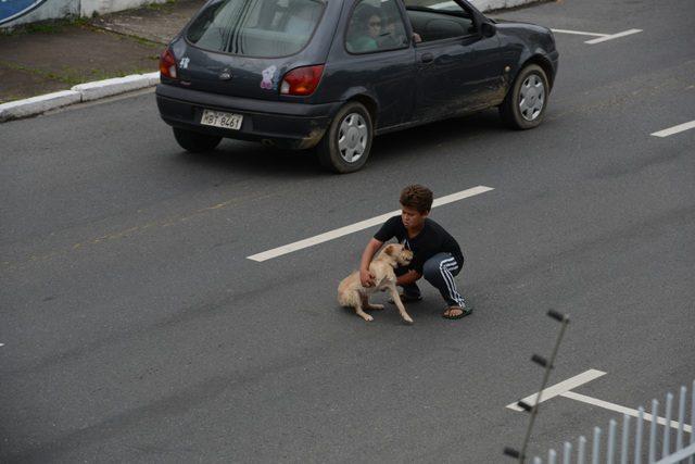 atropelamento-cãozinho-1
