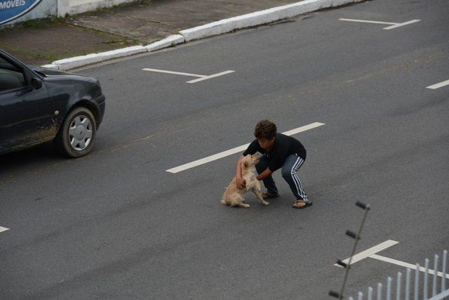 atropelamento-cãozinho-2