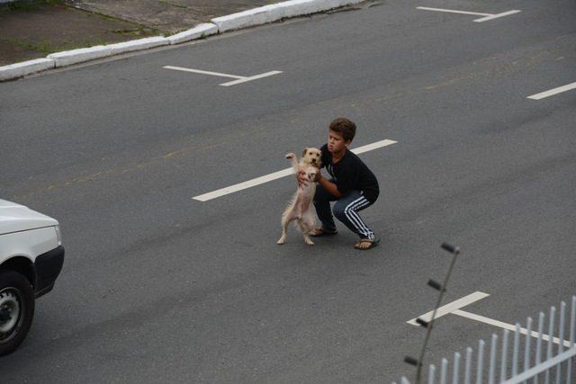 atropelamento-cãozinho-3