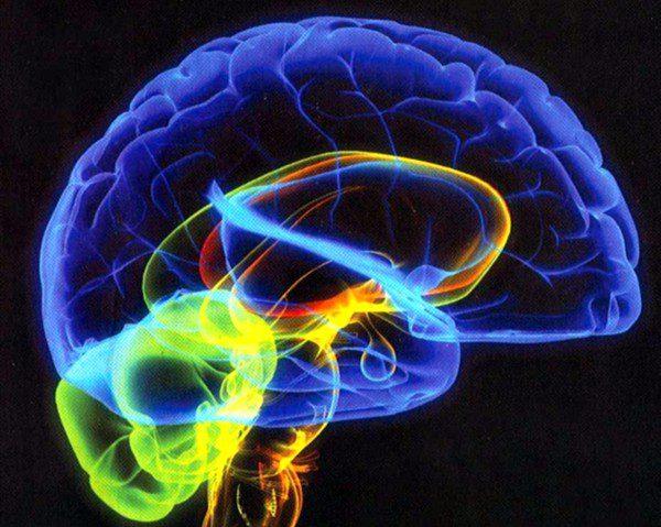 cerebro-consciencia