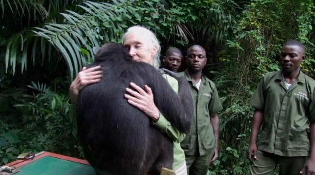 chimpanze7