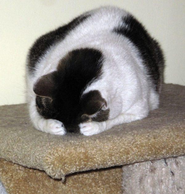 gatos-esconde-esconde-1