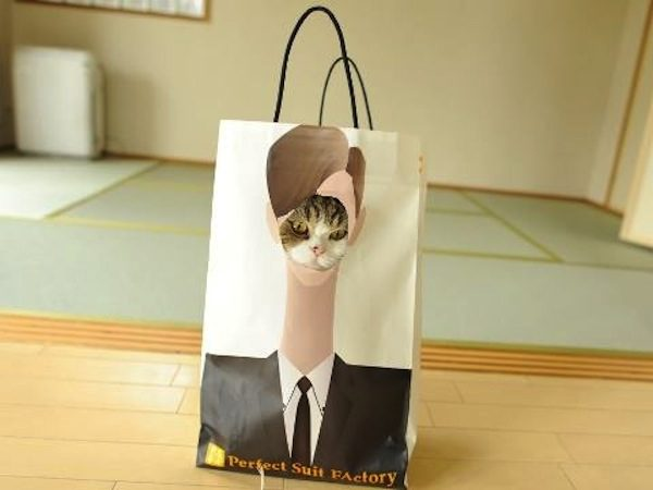gatos-esconde-esconde-12