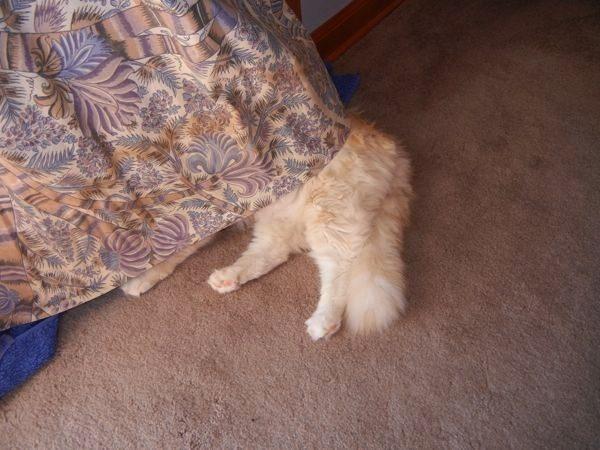 gatos-esconde-esconde-13