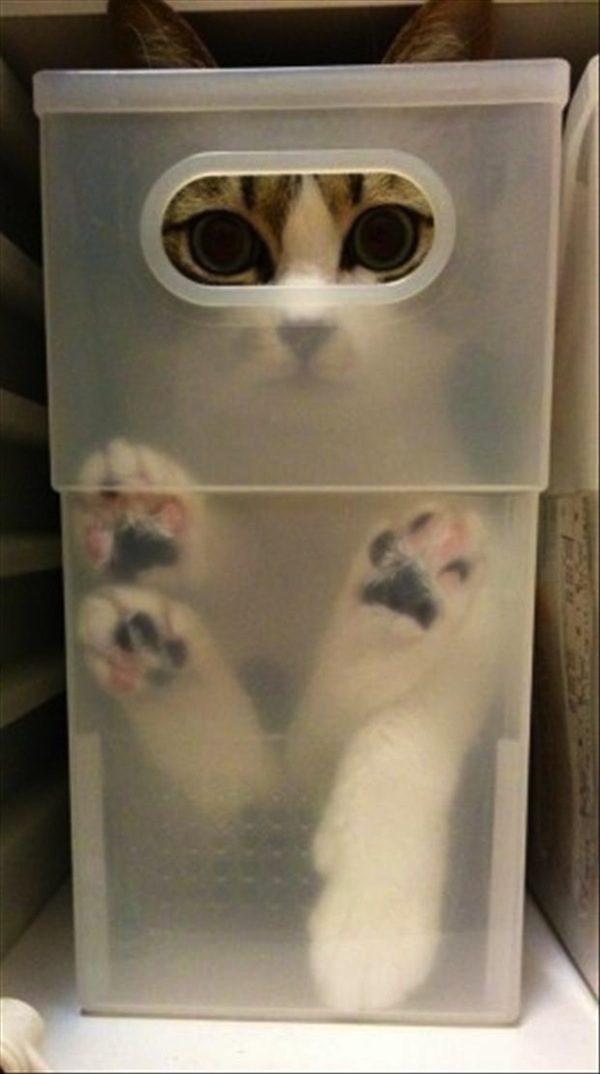 gatos-esconde-esconde-16