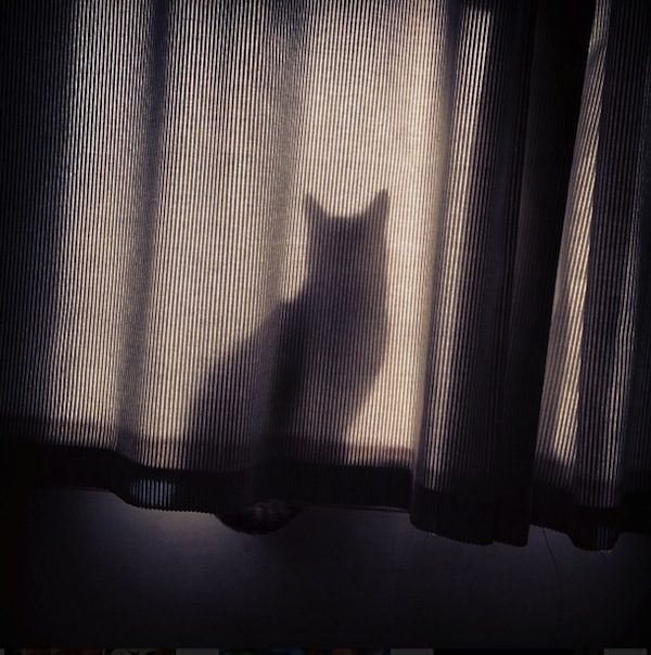 gatos-esconde-esconde-17