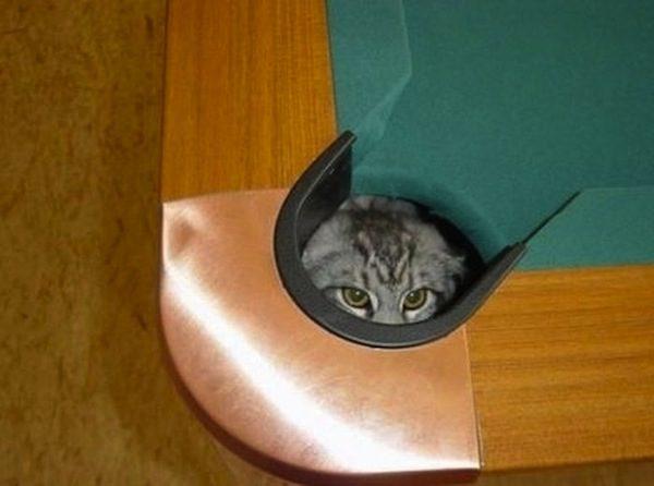 gatos-esconde-esconde-19
