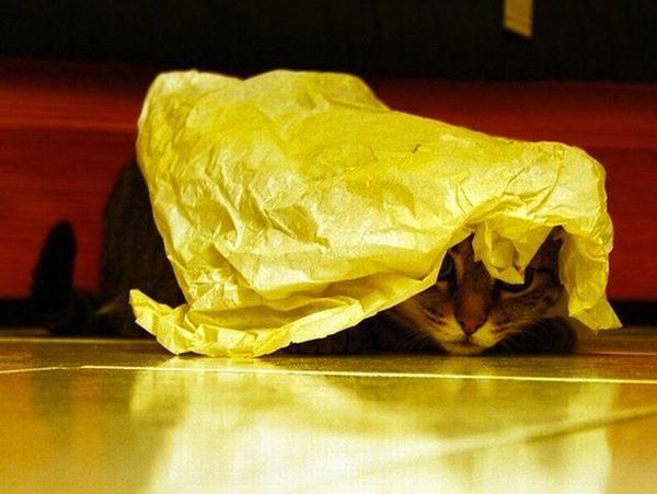gatos-esconde-esconde-20