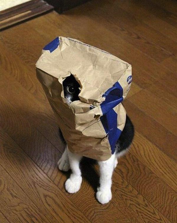 gatos-esconde-esconde-22