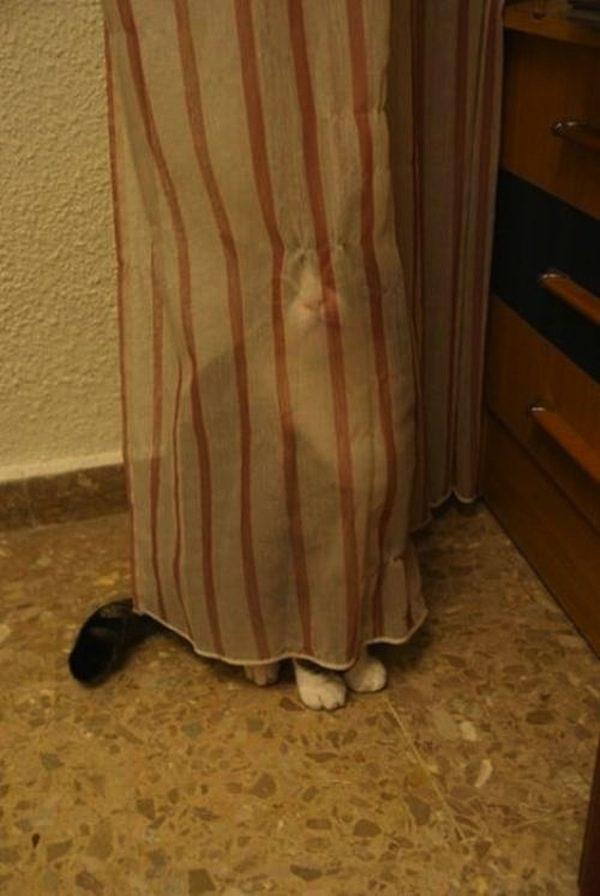 gatos-esconde-esconde-23
