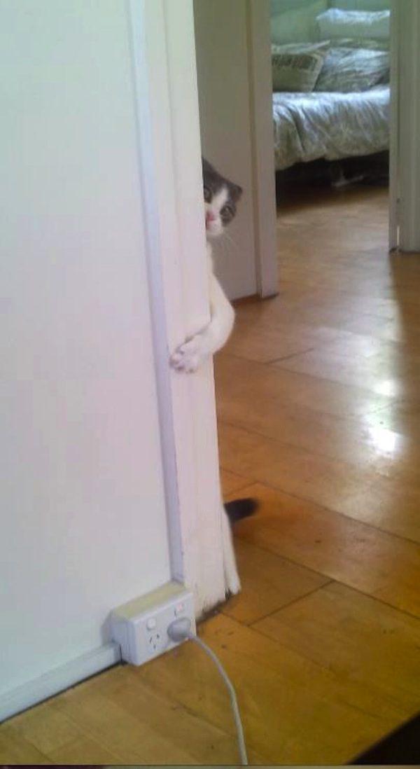 gatos-esconde-esconde-3