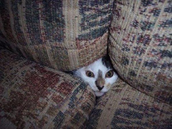 gatos-esconde-esconde-4