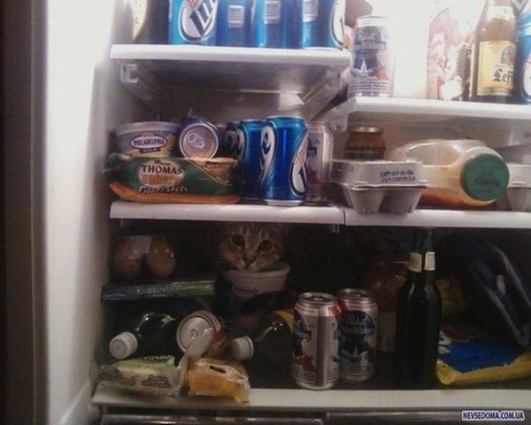 gatos-esconde-esconde-5