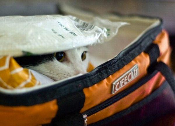 gatos-esconde-esconde-6
