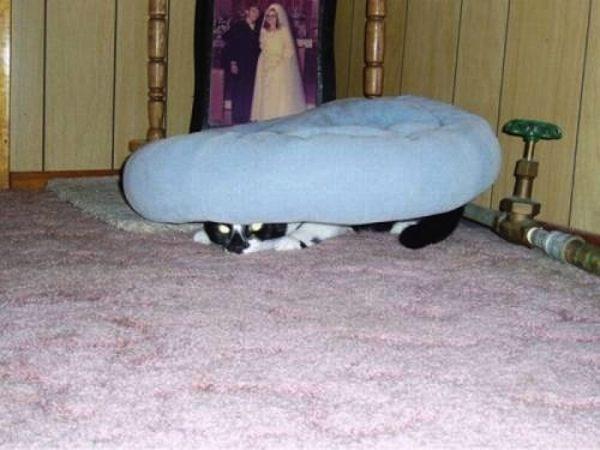 gatos-esconde-esconde-8