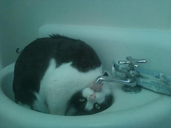 gatos-esquecidos-29