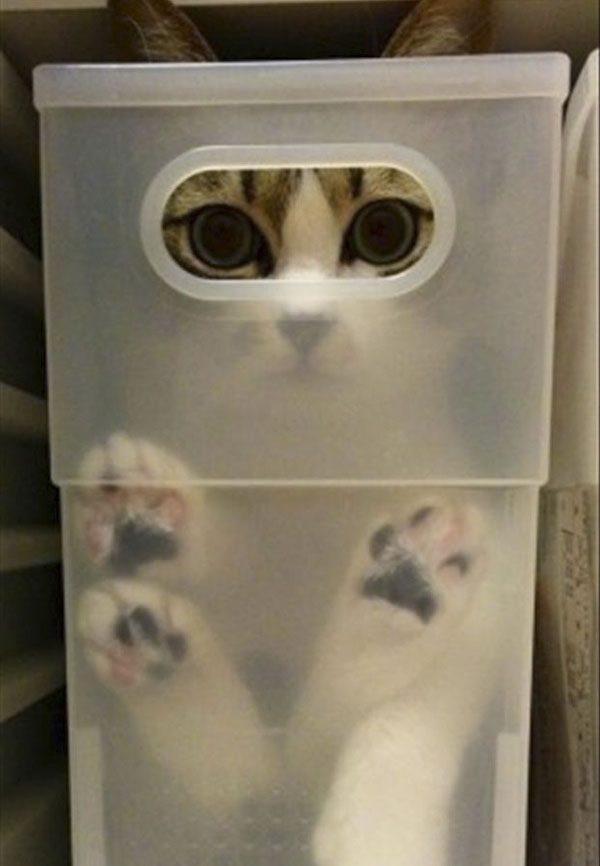 gatos-sao-liquidos-1-1