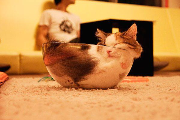 gatos-sao-liquidos-15