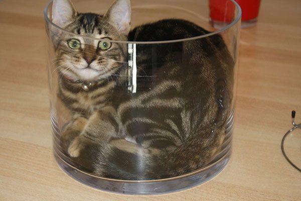 gatos-sao-liquidos-16
