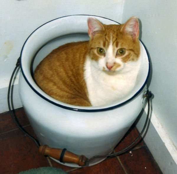 gatos-sao-liquidos-2