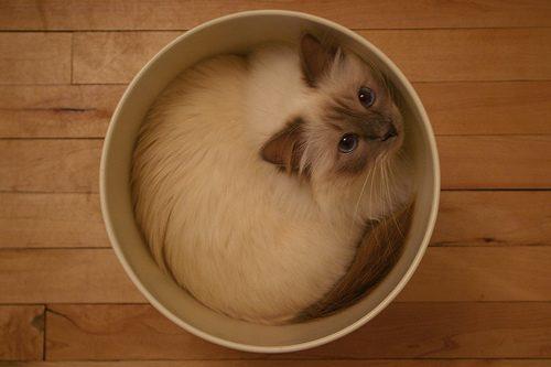 gatos-sao-liquidos-23