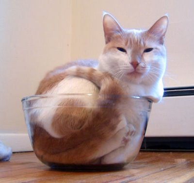 gatos-sao-liquidos-25