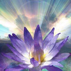 lotus_lightsmall