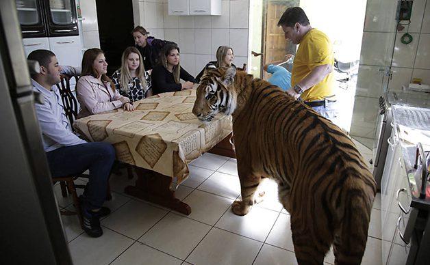 TigerFamily2
