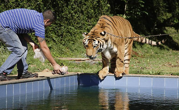 TigerFamily6
