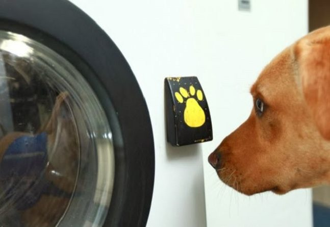 Woof-to-Wash-2