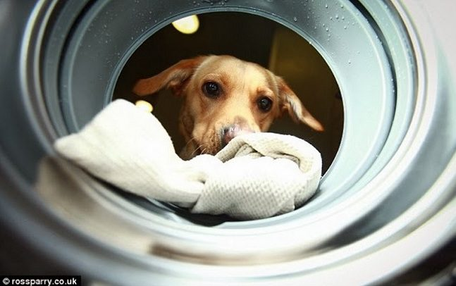 Woof-to-Wash-4