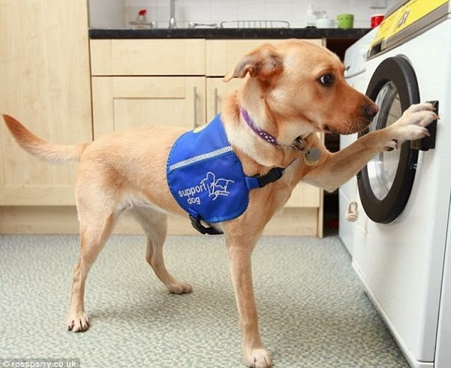 Woof to Wash 5