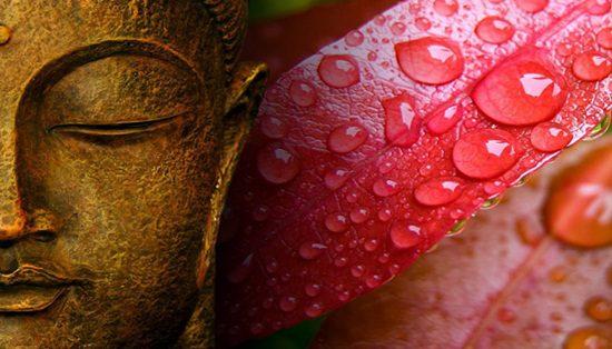 buddhaflor
