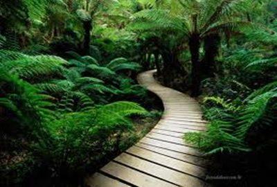 caminho verde.cores