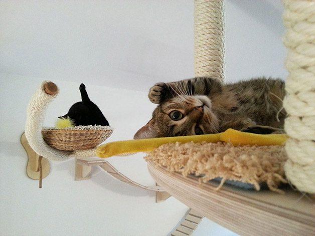 cat-playground-room-goldtatze-9