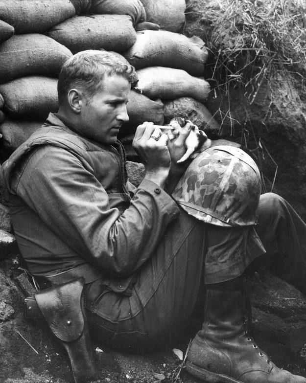 O Sargento da Marinha Frank Praytor alimenta uma gatinha de duas semanas chamada Miss Hap depois que a sua mãe morreu num ataque de morteiro na Coreia.